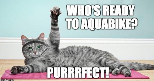 workout cat meme